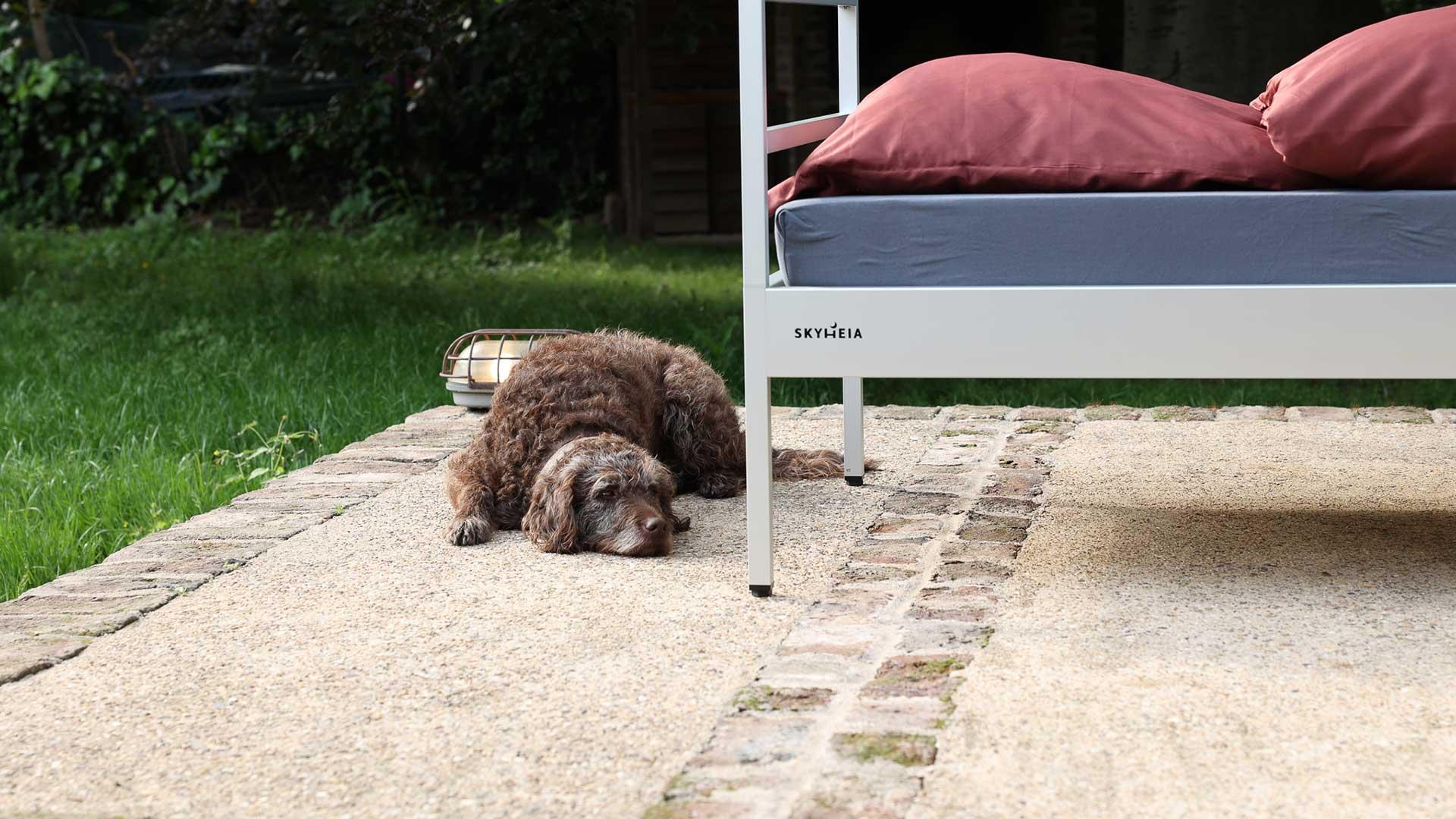 Auch Hunde wissen, wie gemütlich und begehrt die SkyHeia ist. Deswegen passen sie gerne auf das kostbare Bett auf.